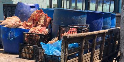 La Policía incautó más de una tonelada de carne en Artigas