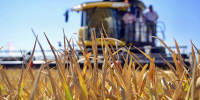 Uruguay vuelve a exportar arroz a Oriente Medio con 60.000 toneladas a Irak