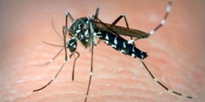 Paraguay pasa de la peor epidemia de dengue a bajas notificaciones en un año