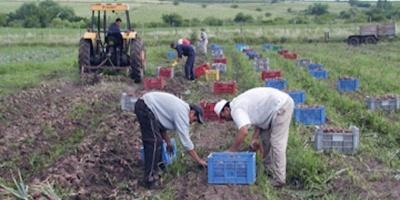 Sindicato rural reclama mejores salarios y condiciones laborales