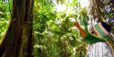 La pérdida de biodiversidad amenaza la nutrición humana en la Amazonía