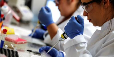 Una bacteria se convierte en la esperanza de la lucha contra el dengue