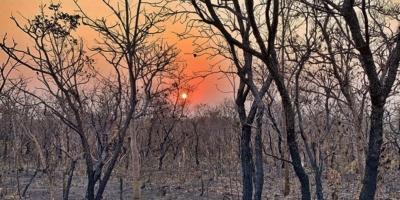 Deforestación de Amazonía brasileña en primer semestre fue la mayor en 6 años