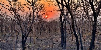 Doce millones de personas sufrirán calor extremo en la Amazonía brasileña