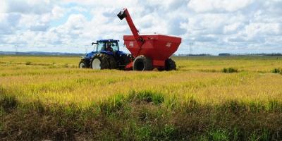 Cosecha de granos en Brasil este año será 1,3 % menor que la de 2020
